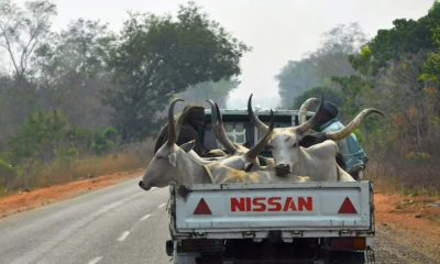 dss-invites-cattle-dealers-over-food-blockade-to-the-south